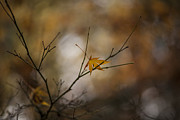 Autumn Leaf Photo Metal Prints - Autumns Solitude Metal Print by Mike Reid