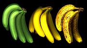Tropical Fruit Prints - Bananas Print by Tony Cordoza