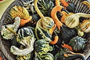 Orange County North Carolina Framed Prints - Basket Full of Gnarly Gourds Framed Print by Paulette Wright