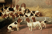 VT Garland - Basset Hounds in a Kennel