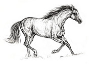 Horse Drawing Prints - Bay horse drawing 2013 09 20 Print by Angel  Tarantella