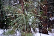Pine Needles Photos - Be Well Nourished by Terry Joyce