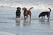 Curve Ball Originals - Beach Dogs by Ruth H Curtis