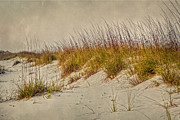 Folde Posters - Beach Grass and Sugar Sand Poster by Judy Hall-Folde