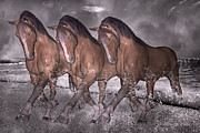 Storm Digital Art Prints - Beach Horse Trio Night March Print by Betsy A Cutler East Coast Barrier Islands