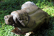 Tree Sculptures - Bear Carving 1 by Hanne Lore Koehler