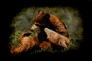 Bears Digital Art - Bear Cubs Playing by Ernie Echols
