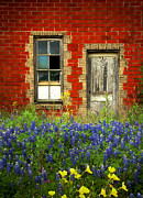 Red Door Prints - Beauty and the Door - Texas Bluebonnets wildflowers landscape door flowers Print by Jon Holiday