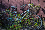 Wheels Prints - Bike in the vines Print by Garry Gay