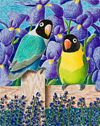Jeanette Kabat - Black-faced Lovebirds