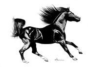 Stallion Drawings - Black Speed by Kayleigh Semeniuk