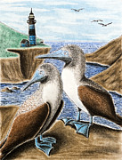 Jeanette Kabat - Blue-footed Booby