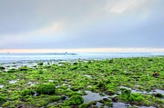 Seaweed Photos - Blue Green Fields by Richard Omura