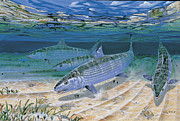 Carey Chen - Bonefish Flats