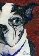 Boston Paintings - Boston Terrior Dog. Lulu 2010 ACEO by Cathy Peterson