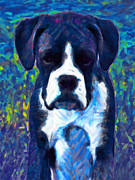 Guard Dog Posters - Boxer 20130126v5 Poster by Wingsdomain Art and Photography
