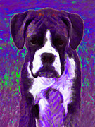 Guard Dog Posters - Boxer 20130126v6 Poster by Wingsdomain Art and Photography