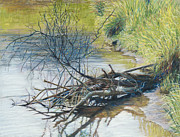 Birdseye Painting Posters - Branches by a River Bank Poster by Nick Payne