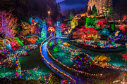 Florid Framed Prints - Buchart Gardens Christmas Lights Framed Print by James Wheeler