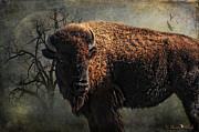 Photomanipulation Photo Prints - Buffalo Moon Print by Karen Slagle