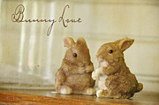 Animals Love Posters - Bunny Love Poster by Jan Amiss Photography