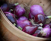 Bushel Photos - Bushel of Red Onions Farmers Market by Julie Palencia