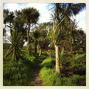 Cabbage Prints - Cabbage trees Print by Les Cunliffe