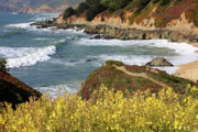 California Beaches Prints - California Coast Overlook Print by Carol Groenen
