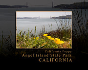 Sausalito Metal Prints - California Poppies Overlook Golden Gate Bridge - Angel Island State Park California Metal Print by David Rigg
