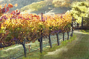 California Vineyard Series Morning In The Vineyard Fine Art Print by Artist and Photographer Laura Wrede