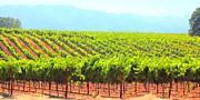 Vineyard Landscape Digital Art Prints - California Vineyard Wine Country 5D24623 long Print by Wingsdomain Art and Photography