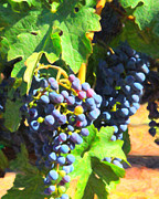 Wine Grapes Prints - California Wine Country Grape Vine 5D24630 Print by Wingsdomain Art and Photography