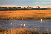 Salt Marsh Posters - Cape Cod National Seashore Province Lands Salt Marsh Poster by John Burk