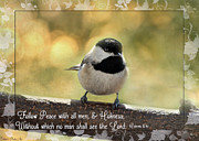 Chickadee Greeting Cards Framed Prints - Carolina Chickadee  Framed Print by Debbie Portwood