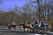 Carriage Horse Photos - Carriage Convoy in Central Park by Randy Aveille