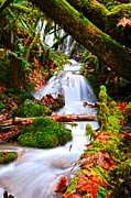 Randy Moss Photo Prints - Cascade Creek Print by Randy and Donna Giesbrecht