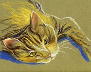 Domestic Animals Pastels - Cat with Gold Eyes by MM Anderson