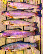 Wingsdomain Art and Photography - Catch of The Day - Painterly - v1