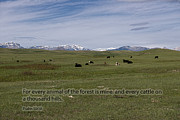 Psalm 50 Posters - Cattle and Bible Verse Poster by David Arment