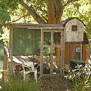 Chicken Coop On The Farm Fine Art Print by Artist and Photographer Laura Wrede