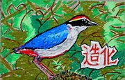 Featured Pastels - Chinese Fairy Pitta by David Olson