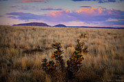 Prescott Photos - Cholla Colors at Sunset by Aaron Burrows