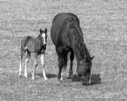 Janice Rae Pariza - Colorado Mare and Colt