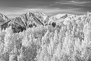 Snow Tree Prints Posters - Colorado Rocky Mountain Autumn Beauty BW Poster by James Bo Insogna