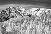 Snow Tree Prints Metal Prints - Colorado Rocky Mountain Autumn Magic Black and White Metal Print by James Bo Insogna