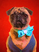 Edward Fielding - Colorful Dapper Pug