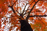 Photos Of Autumn Photos - Colorful Fall Canopy by Scott Cameron