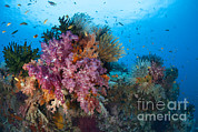 Whips Framed Prints - Colorful Soft Corals Adorn The Stunning Framed Print by Steve Jones