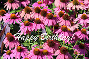 Rosanne Jordan - Coneflowers for Your Birthday