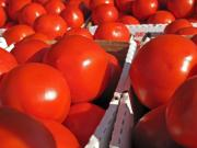 Farm Stand Art - Cool Tomatoes by Barbara McDevitt